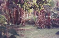 Jardin botanique 6