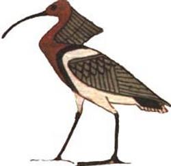 AKH ou le Netjer Ibis (Ancienne Egyp