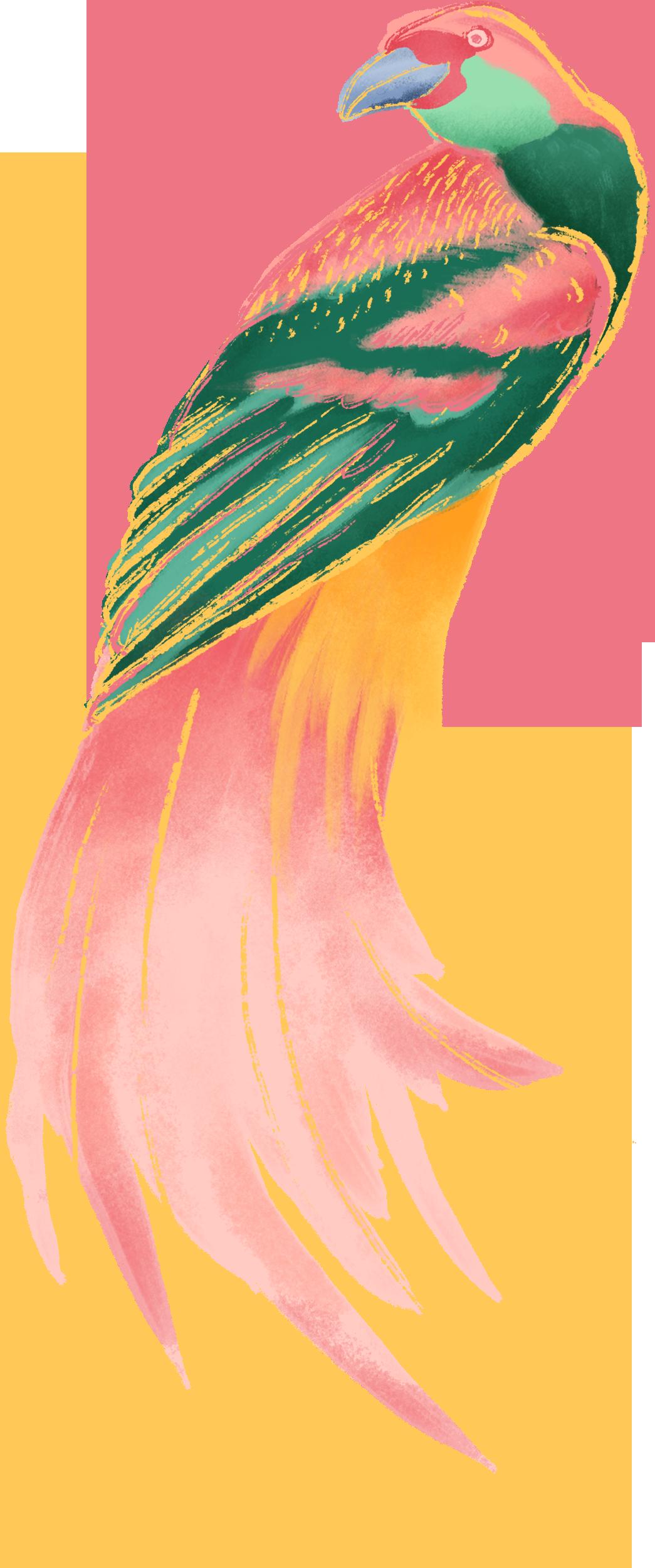 Renkli Kuş