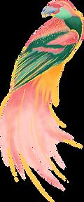 barevné Bird