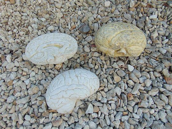 Prop Brains