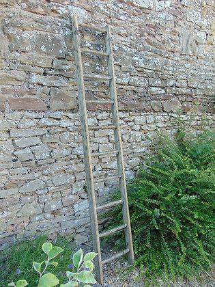 10 Rung Ladder