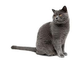 kattenpsycholoog