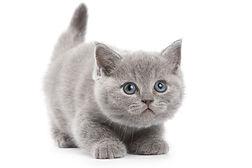 Kitten consultatie