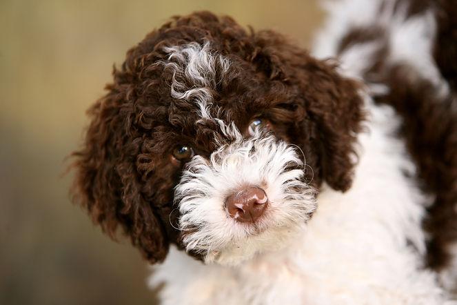puppycursus prive
