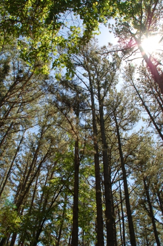 Walk through the woods.