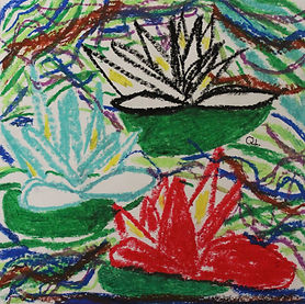 Quinn - Waterlilies.jpg