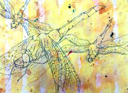 RobbieBoss_Dragonfly