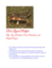 Binder1.pdf_Page_05.jpg