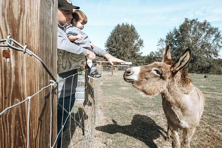 Petting donkeys