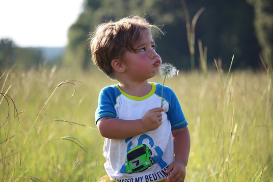 Blowing in the fields