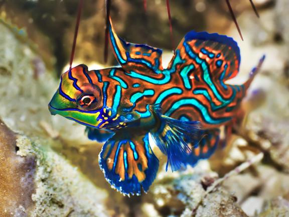 Borneo_Malesia_Diving
