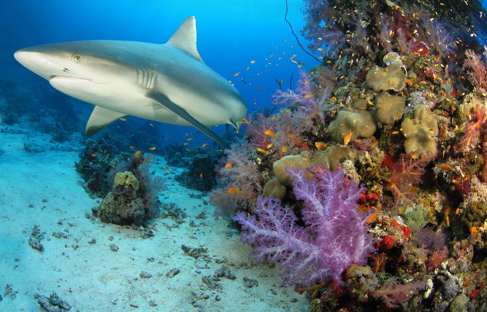 Bonaire_Diving