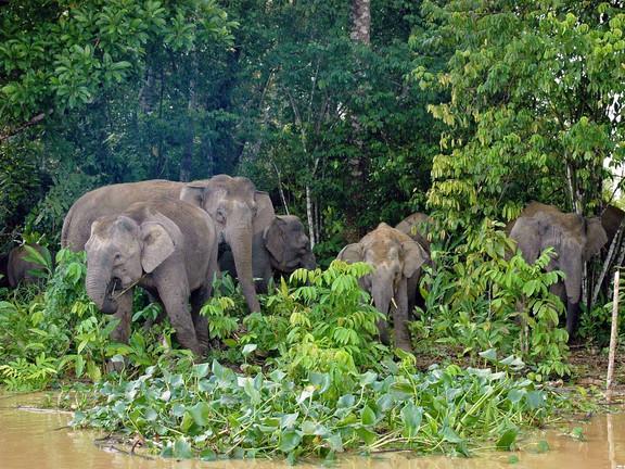 Borneo_Malesia_escursioni