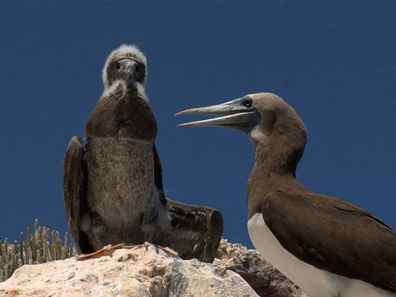 Espiritu Santo Island Baja California Sur