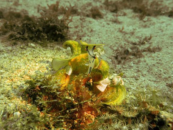 Filippine_diving