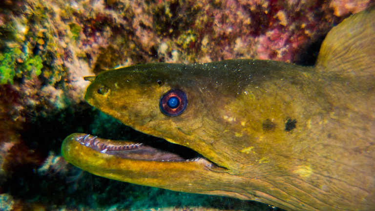 Cuba_Diving