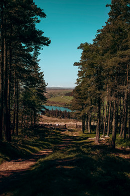 View out to Leighton Reservoir from Druids Temple