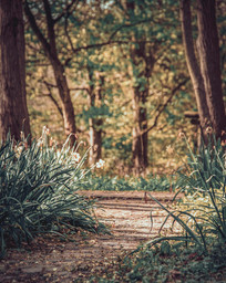 Pathway through Henshaws Arts and Crafts Centre's gardens