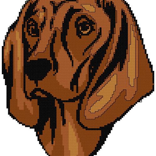 Bavarian Mountain Dog Portrait