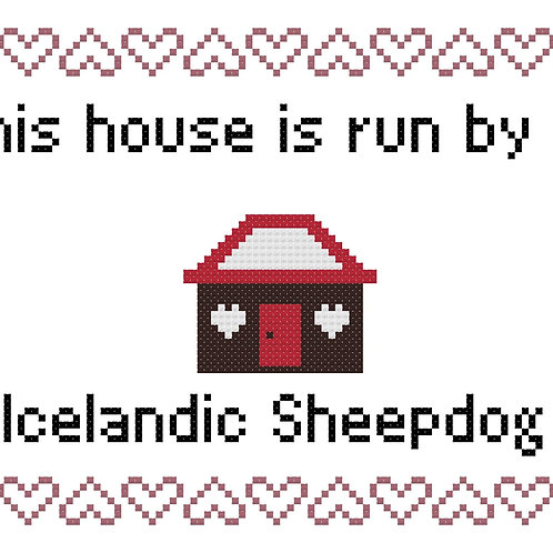 Icelandic Sheepdog, This house is run by