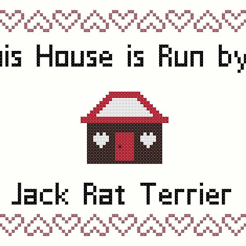 Jack  Rat Terrier, This house is run by