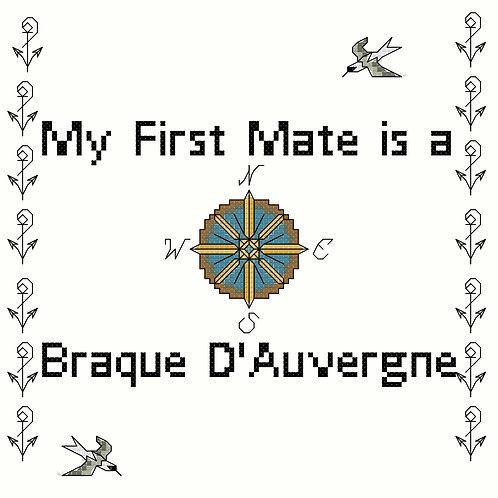 Braque D'Auvergne, My First Mate is a
