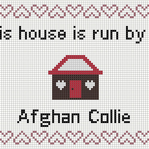 Afghan Collie, This house is run by
