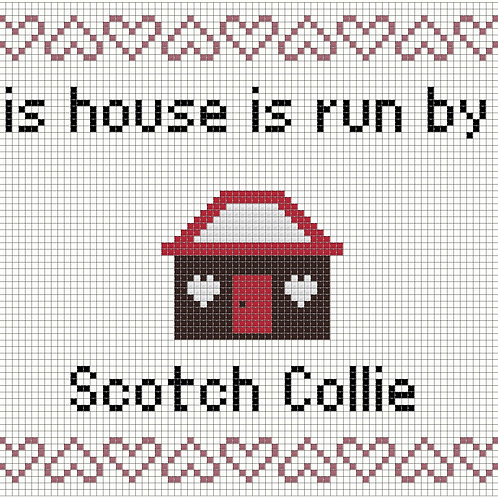Scotch Collie, This house is run by