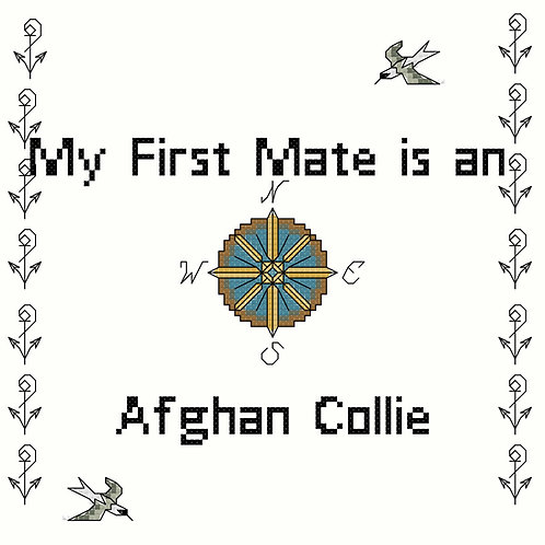 Afghan Collie, My First Mate is a