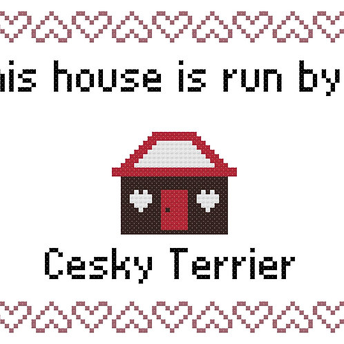 Cesky Terrier, This house is run by