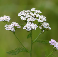 Yarrow Revisited..a Bit of Poetry.