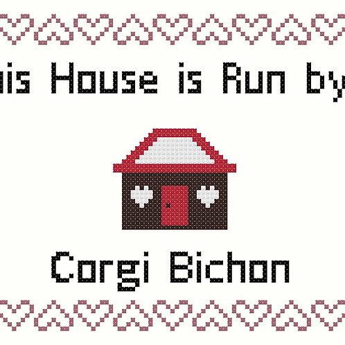 Corgi Bichon, This house is run by
