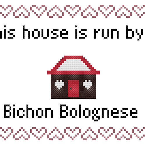 Bichon Bolognese, This house is run by