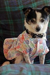 bessie in night shirt apparel.JPG