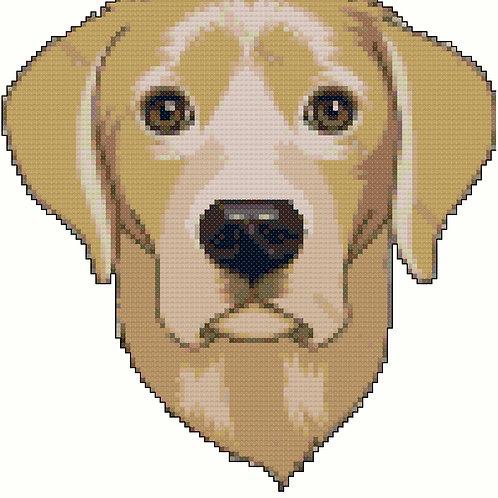 Labrador Retriever Portrait (Frontal)