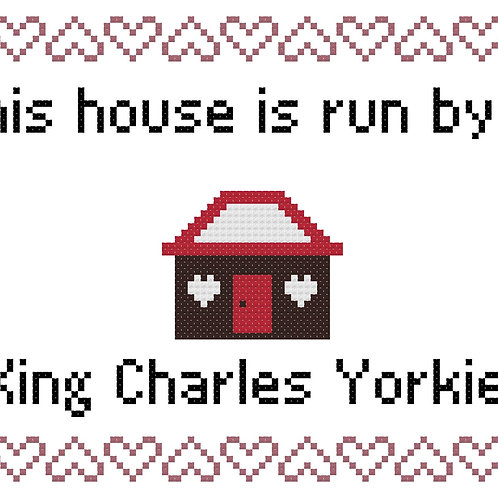 King Charles Yorkie, This house is run by