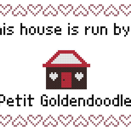 Petit Goldendoodle, This house is run by