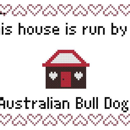 Australian Bull Dog, This house is run by