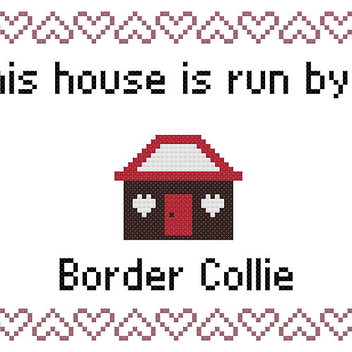 Border Collie, This house is run by