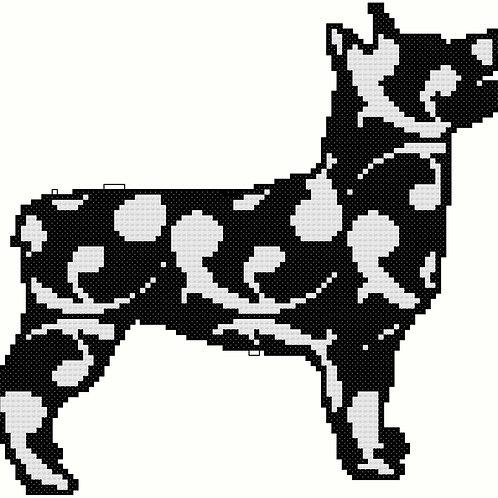 Swedish Vallhund in Modern Black