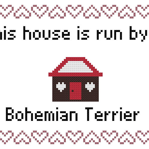 Bohemian Terrier, This house is run by