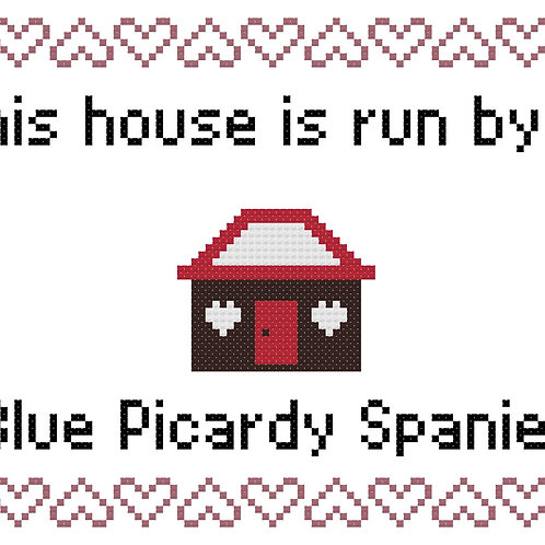 Blue Picardy Spaniel, This house is run by
