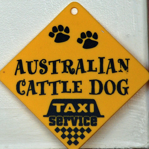 Australian Cattle Dog, Taxi Service