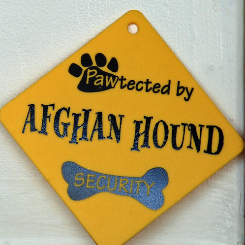 Afghan Hound, Pawtected by Doberman Security