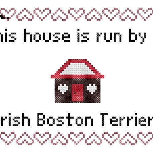 Irish Boston Terrier, This house is run by