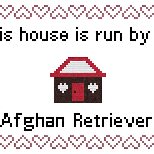 Afghan Retriever, This house is run by