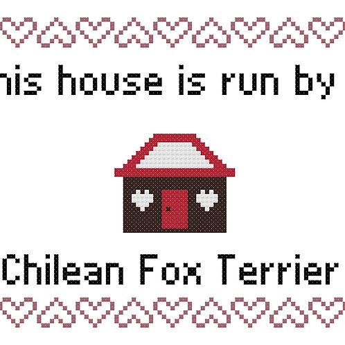 Chilean Fox Terrier, This house is run by