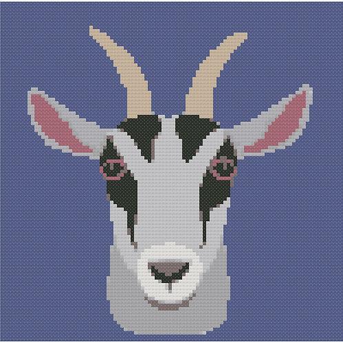 Grey Goat Portrait