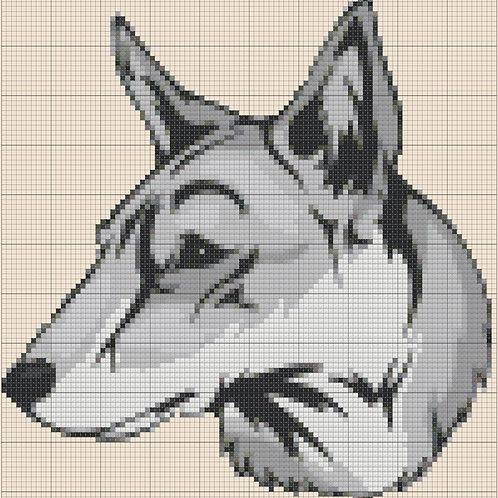 Saarlooswolfhond Portrait